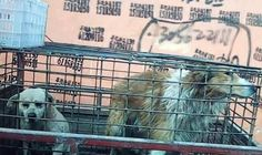 THE horror of the dog-leather trade in China has been revealed in a disturbing new video, showing animals being beaten and slaughtered for their skin – which could end up on British high-streets.