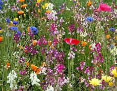 Wildflowers will add softness and fill up an arrangement.