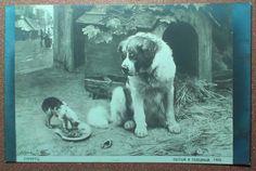 Antique dog photo postcard circa 1900s Saint by JustSweetHoney