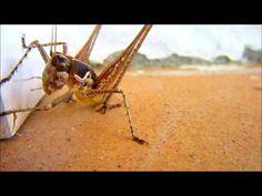 A SZÖCSKE,A HANGYA meg a PÓK Vídám Zenés Vídeo mp4 Insects, Animals