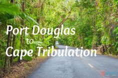 Things to do and see on a road trip from Port Douglas to Cape Tribulation in the Daintree Rainforest, including Mossman Gorge. Great Aussie road trip
