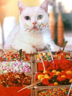 食いしん坊猫 | Sumally