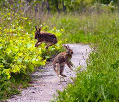 Wild Toronto: Rabbits are hopping at the Leslie spit