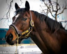 Cigar (1990-). 1996 Horse of the Year