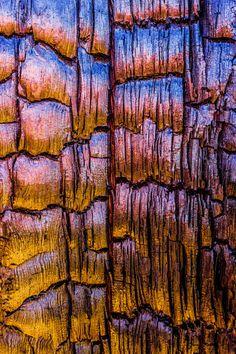 'Burnt Tree Detail' by Alexander S. Kunz on artflakes.com as poster or art print $18.03
