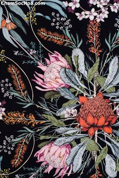 Ideas flowers black background painting colour for 2019 Botanical Wallpaper, Botanical Drawings, Botanical Prints, Black Background Painting, Flowers Black Background, Black Background Pattern, Art Background, Australian Native Flowers, Australian Artists