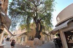 old town , Kos island , Greece Cafe Bistro, Winter Time, Old Town, Kos, Greece, Autumn, Island, Outdoor Decor, Plants