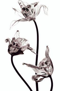 SKULL  X-RAY Art Print #skull #art