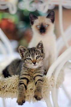 Two contrasting, but equally appealing kittens.