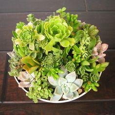 Lush Succulent Bowl - 'Bad' Desert Style Collection - Dot & Bo