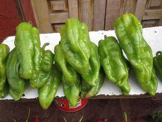 Chile chorro: Su cultivo se hace principalmente en el área de Dolores, Hidalgo, Guanajuato, Durango y Sinaloa.