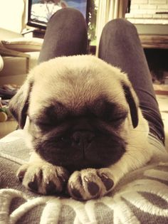 OMG those little paws!