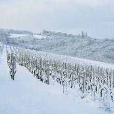 Sneeuwkriebels.. heb jij ze ook al? ☃ Het winterse Limburgse heuvellandschap ziet er met een dik pak sneeuw heel sprookjesachtig uit. ❄ Het perfecte decor voor een heerlijke winter wandeling. ✨ De pittoreske dorpjes zijn magisch verlicht en op meerdere plekken kun je een heerlijke warme chocolademelk to-go halen. 🍪☕ When You Can, Resorts, Holiday, Outdoor, Instagram, Winter, Outdoors, Winter Time, Vacations