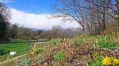 わさび田とツクシとタンポポの花