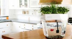 Aquaponics fish tanks will be among the very first elements of aquaponics systems that you're most likely to consider, and in a number of ways we'll follow similar guidelines to the ones we follow for growbed considerations.