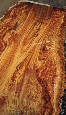 English Wych Elm Slabs- a gorgeous burled log!