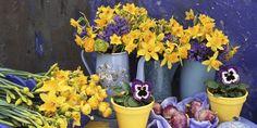 Indoor Flower Tips - Keep Flowers Fresh for Longer