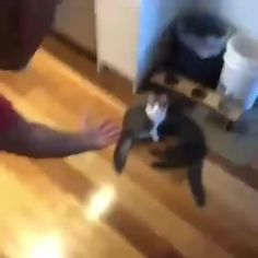 Funny Cats and Kittens Meowing Compilation – Everything Cute Cat Gif, Cute Cats, Funny Cats, Funny Animals, Cute Animals, Funny Cat Compilation, Kitten Meowing, Funny Vines, Cat Life