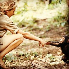 My favourite ever photo. Jane Goodall reaches out to a baby chimp. From a National Geographic in the 1960s. by DetectiveKabalski, via Flickr