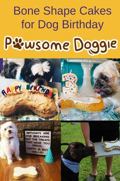 Looking For Ideas On Making A Dog Birthday Cake Look At What Our Customers Did