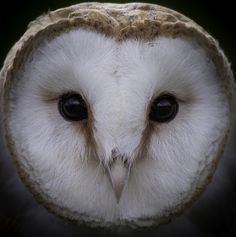 Owly ~ photographer Richard Knight  #photographer