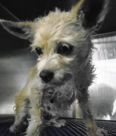 UPDATE:  Current Status Is Unknown. 35073966 located in El Paso, TX, to be destroyed 5/12/17