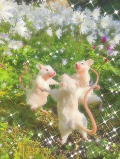 Photo Wall Collage, Collage Art, Animes Wallpapers, Cute Wallpapers, Cute Rats, Nature Aesthetic, Flower Aesthetic, Aesthetic Fashion, Cute Little Animals