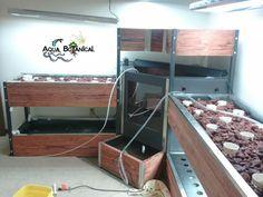 200 gallon custom in home aquaponics system by Aqua Botanical