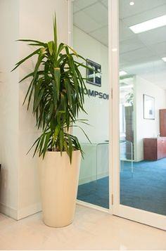 buy amazing office plants from osborne plants service bestofficeplants amazing office plants