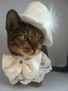 Pet Wedding Costume for the Groom by FiercePetFashion on Etsy, $75.00
