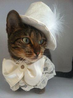 #gato #cat