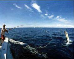 DONE: went deep sea fishing in July, 2014 in Marathon Keys, FL. We caught some tuna.