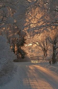 to Winter Winter Sunset Creates Beautiful Light And Shadows On The Snow Covered Trees And Road.Winter Sunset Creates Beautiful Light And Shadows On The Snow Covered Trees And Road. Winter Szenen, Winter Sunset, Winter Love, Winter Magic, Winter Christmas, Winter Trees, Winter Style, Christmas Time, Europe Christmas