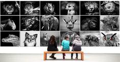 Rám, rámy, rámečky na fotografie, na zrcadla, obrazy, ale třeba i na puzzle | SKLOMAT Wall Canvas, Canvas Prints, Original Wallpaper, Animal Fashion, Animal Sculptures, Animal Paintings, Designer Wallpaper, Decoration, Simple Style