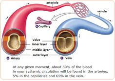 Biology Notes for IGCSE 2014: # 72 Arteries, veins and capillaries - structure a...