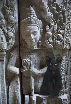 22 Stunning Pictures Of Cats In Incredible Places Around The World - Dose - Your Daily Dose of Amazing Buddha, Crazy Cat Lady, Crazy Cats, Cat Photography, Back Home, Cool Cats, Animal Pictures, Cats And Kittens, Funny Cats