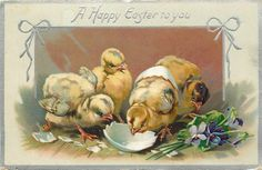A HAPPY EASTER TO YOU  four chicks, one emerging from shell, violets