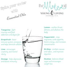 It is true, you can ingest almost all Young Living Essential Oils! Are you wondering what ones to try first, and what benefits they will provide! Check out this graphic for more information!
