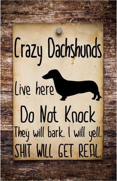 """Get wonderful tips on """"Dachshund dogs"""". They are accessible for you on our website. Dachshund Breed, Funny Dachshund, Mini Dachshund, Daschund, Funny Dog Memes, Cat Memes, Funny Dogs, Memes Humor, I Love Dogs"""