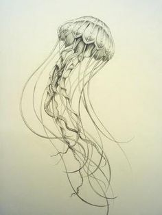 jellyfish. beautiful linework. This would look great as a start to the half sleeve I want by Alegardia