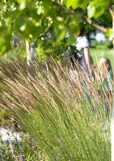 Koristeheinät ovat muodoiltaan moni-ilmeisiä, ja niiden avulla puutarhan istutuksiin saadaan vaihtelua. Lue ja valitse suosikkisi!