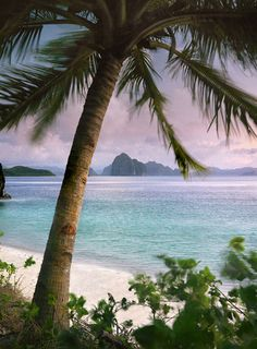 Palms rustle in the evening breeze on a deserted beach on one of 7,000 islands in the Philippines, El Nido