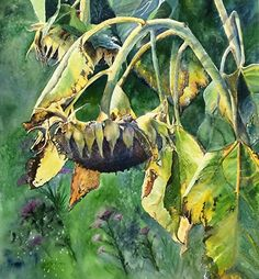 Nodding Off by mary pusey Watercolor ~ x Watercolor Sunflower, Sunflower Art, Watercolor Texture, Watercolor Flowers, Watercolor Paintings, Watercolors, Sunflower Pictures, Still Life Drawing, Floral Artwork