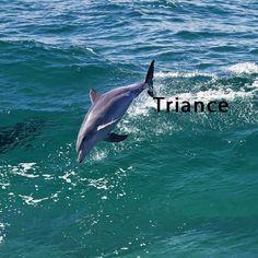 Dolphin no 1.