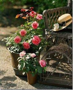flores-facebook-tumblr-rosas-las flores-fotos de flores-722