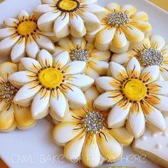 Sunflower daisy flowers