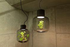 T'agradaria decorar la teva casa amb un llum com aquesta? L'equip de Nui Studio ha aconseguit compondre un llum amb un ecosistema completament autònom que permet a les plantes fotos sintetitzar fins i tot en espais interiors sense finestres. Quan la llum LED està encès, les plantes poden fer la fotosíntesi i quan s'apaga, consumeixen el seu propi oxigen. Una original forma de decoració amb la lampara Mygdal.    www.imtecnics.com  #imtecnics #curiositats  #decoració