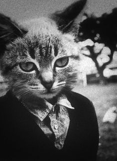 Mr. Cat - When I worked at Crossley's Nursery, we had a grey tabby by this name.