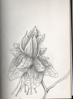Flower - Drawing