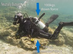 What makes us float and/or sink and how does it relate to perfect buoyancy  http://www.blog.scubatechdivers.com/2014/02/buoyancy-basics-archimedes-principle.html